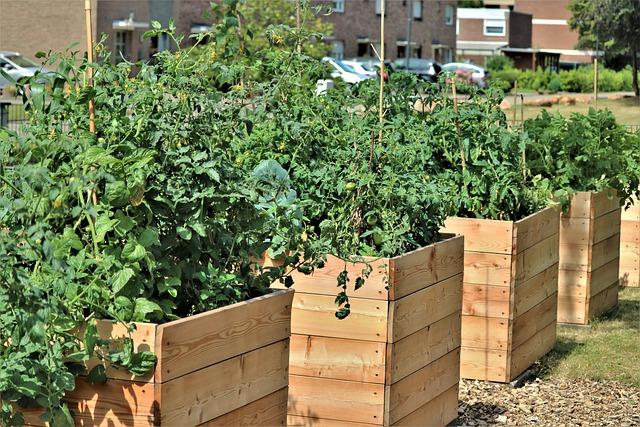 Canteiro em caixas de madeira elevadas com plantas verdes