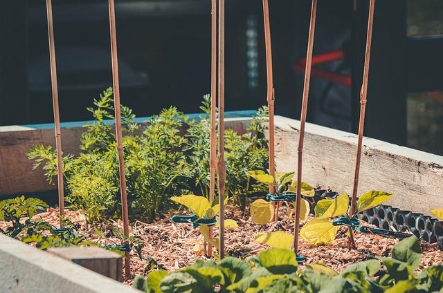 Guias de crescimento para plantas