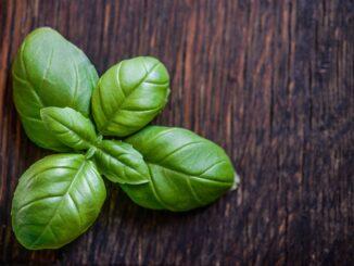 Folhas de manjericão em uma mesa de madeira